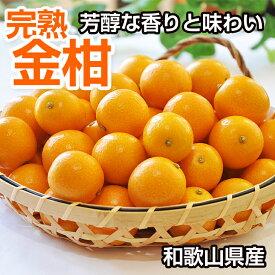 【ふるさと納税】まるかじり 完熟金柑 3kg(和歌山県産)