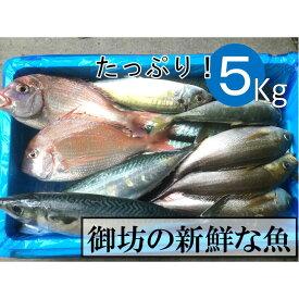 【ふるさと納税】御坊産鮮魚セット 5kg 【定期便】(年4回お届け)