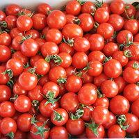 【ふるさと納税】完熟ミニトマト(キャロルセブン)約2kgトマト農家直送和歌山県産