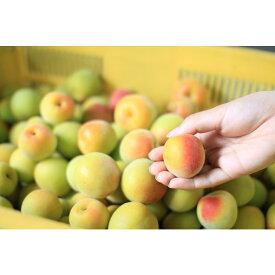 【ふるさと納税】観音山完熟オレンジ梅 3kg※2022年6月中旬〜6月末発送予定