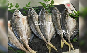 【ふるさと納税】鮮魚問屋のアジの干物セット 真あじ大4枚 真あじ小6枚 丸あじ4枚