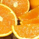 ふるさと オレンジ おまかせ 紀伊国屋 文左衛門