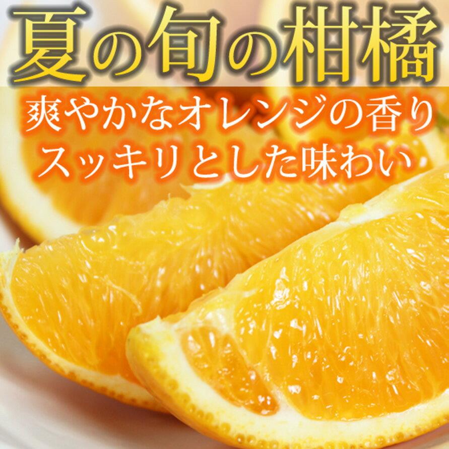 【ふるさと納税】希少な国産バレンシアオレンジ 7kg※平成31年7月初旬〜7月中旬発送の商品になります