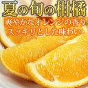 ふるさと バレンシア オレンジ