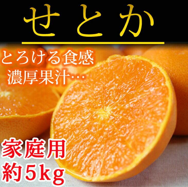 【ふるさと納税】とろける食感!柑橘の大トロ せとか 約5kg(ご家庭用)※2019年2月上旬頃〜2019年2月中旬頃に順次発送予定