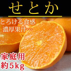 【ふるさと納税】■とろける食感!柑橘の大トロ せとか 約5kg(ご家庭用)※2020年2月上旬頃〜2020年2月中旬頃に順次発送予定