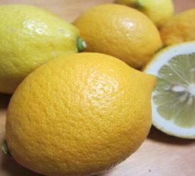 【ふるさと納税】【国産】紀州和歌山 有田レモン 3kg※ 2021年9月下旬頃より順次発送