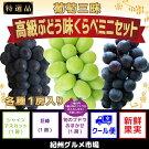 【厳選】葡萄三昧高級ぶどう味くらべミニセット紀州グルメ市場