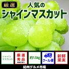【新鮮果実】人気のシャインマスカット約1.5kg紀州グルメ市場