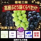 【厳選】葡萄三昧高級ぶどう味くらべセット紀州グルメ市場