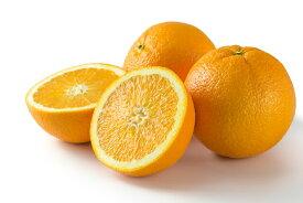 【ふるさと納税】■和歌山県有田産 ネーブルオレンジ 約7kg 20〜30玉※2020年1月中旬頃より順次発送予定
