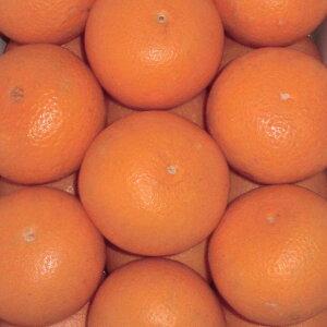 【ふるさと納税】■和歌山県有田産 清見オレンジ(きよみおれんじ) 約5kg 20〜30玉※2020年3月頃より順次発送予定