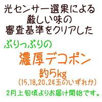 【ふるさと納税】厳選!!和歌山の濃厚デコポン