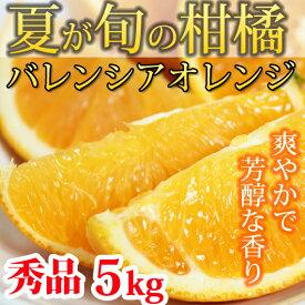 【ふるさと納税】■秀品 希少な国産バレンシアオレンジ 5kg※2020年6月下旬〜7月中旬発送の商品になります