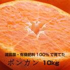 【ふるさと納税】特別栽培ポンカン10kg【発送時期指定可】【有機肥料100%・減農薬栽培の春みかんを農家直送】