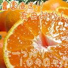 【ふるさと納税】農園直送!!有田みかん10kg