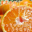 【ふるさと納税】農園直送!!有田みかん13kg