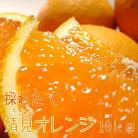 【ふるさと納税】清見オレンジ10kg