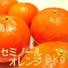 【ふるさと納税】セミノールオレンジ8kg