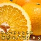 【ふるさと納税】有田の八朔10kg