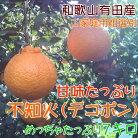 【ふるさと納税】不知火(デコポン)7kg