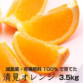 【ふるさと納税】特別栽培 清見オレンジ3.5kg【発送時期指定可】【有機肥料100%・減農薬栽培の春みかんを農家直送】