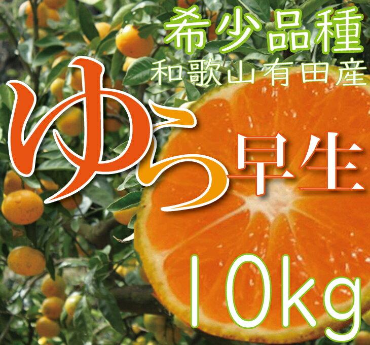 【ふるさと納税】濃厚な味わいゆら早生みかん10kg【10月上旬より発送】希少品種《有機質肥料100%》