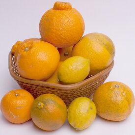 【ふるさと納税】<4月発送>有田の柑橘詰合せ3.5kg