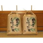 【ふるさと納税】令和元年産和歌山県広川町キヌヒカリ10kg農家直送