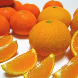 【ふるさと納税】【産地直送】旬の濃厚柑橘詰め合わせセット 約4kg