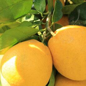 【ふるさと納税】【爽快柑橘】有田育ちの爽やか河内晩柑(ご家庭用) 約5kg