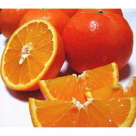 【ふるさと納税】【産地直送】爽快カンキツ セミノールオレンジ 約4kg