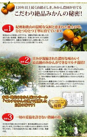 【ふるさと納税】\創業120年農家直送/特選有田みかん3kg【お届け時期選択できます】