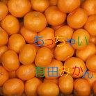 【ふるさと納税】ちっちゃい有田みかん5kg