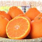 【ふるさと納税】紀州有田産不知火(しらぬひ)約5kg