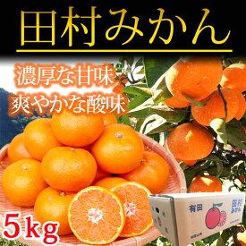 【ふるさと納税】高級ブランド田村みかん 5kg