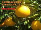 【ふるさと納税】自然豊かな有田郡広川町産果汁たっぷり美味しいさつきはっさく