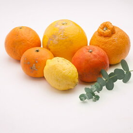 【ふるさと納税】<4月発送>家庭用 有田の柑橘詰合せ5kg