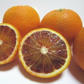 """【ふるさと納税】【春の美味】【高級柑橘】濃厚ブラッドオレンジ""""タロッコ"""" 5kg"""