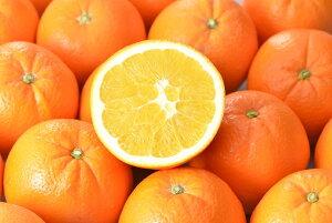 ※準備中 【ふるさと納税】ネーブルオレンジ 9個〜12個入り※1月中旬〜3月下旬頃発送予定