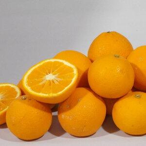 【ふるさと納税】蛍飛ぶ町から旬の便り きよみオレンジ訳あり10kg 平武農園※2020年3月中旬頃〜4月中旬頃順次発送予定