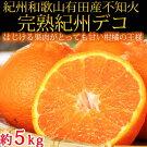 果肉プリプリ♪完熟紀州デコ(不知火)約5kg