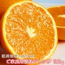 【ご家庭用訳アリ】紀州有田産清見オレンジ7.5kg