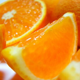 【ふるさと納税】【春の美味】【農家直送】濃厚清見オレンジ(ご家庭用)4kg※2021年3月上旬〜3月下旬頃に順次発送予定※北海道・沖縄地域へのお届け不可