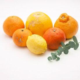 【ふるさと納税】<1月より発送>家庭用 旬の柑橘詰合せ6kg【詰め合せ・詰め合わせ】※2022年1月上旬より順次発送予定※北海道、沖縄配送不可※こちらの返礼品は、2021年より寄附金額・内容量を見直し新たにご提供させていただいております