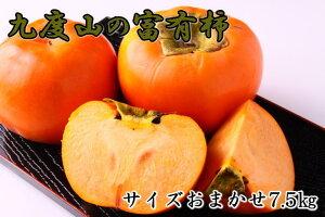 【ふるさと納税】[柿の名産地]九度山の富有柿約7.5kgサイズおまかせ※11月頃〜12月上旬頃に順次発送予定