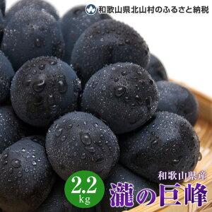 【ふるさと納税】和歌山県瀧の巨峰2.2kg<同梱不可>