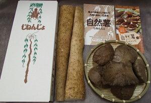 【ふるさと納税】自然薯・宇宙芋(エアーポテト)セット【期間限定】