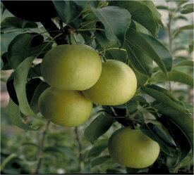 【ふるさと納税】255 二十世紀梨(秀品(7.5キロ)砂丘のなし屋さん)鳥取 フルーツ 果物 ジューシー 梨 なし ナシ 送料無料