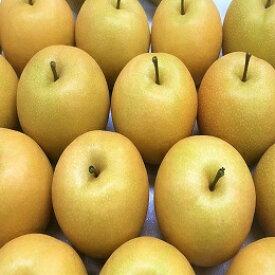 【ふるさと納税】462 新甘泉(秀品(2.5キロ)たさき農園)鳥取 フルーツ 果物 ジューシー 梨 なし ナシ 送料無料 期間限定